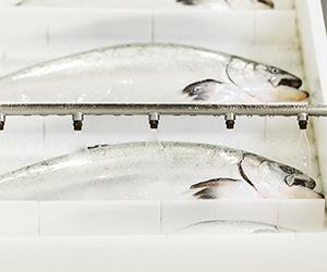 FactoryFish1